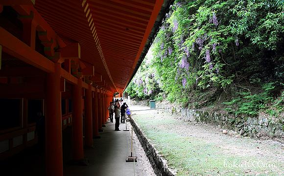 150503_kasuga-taisya2