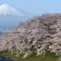 富士山と桜、日本の心